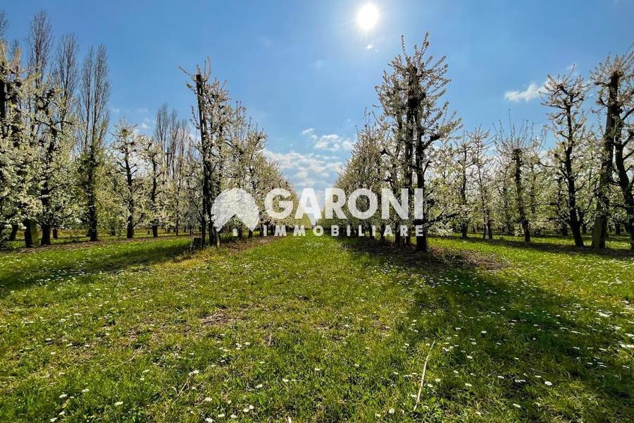 fotografie - terreno agricolo Brisighella (RA) Villa Vezzano