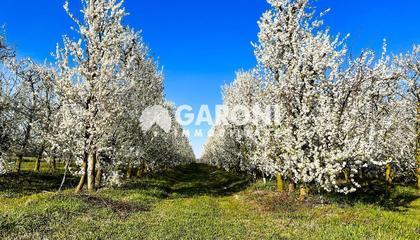 terreno agricolo Faenza (RA)