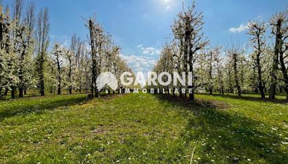 terreno agricolo Brisighella (RA) Villa Vezzano